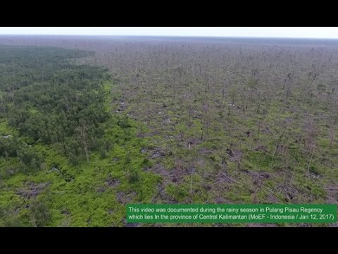 Second video reemphasizes untrue claims unhelpful in preventing peat fires   Pulang Pisau