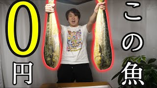 訳アリ?なんで??無料でもらったこちらの巨大魚。大好物の『あの料理』にして銀色を飲みまくる!