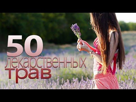 50 СИЛЬНЕЙШИХ ЛЕКАРСТВЕННЫХ ТРАВ | Шикоз ТВ