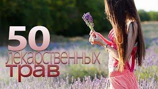 50 СИЛЬНЕЙШИХ ЛЕКАРСТВЕННЫХ ТРАВ   Шикоз ТВ