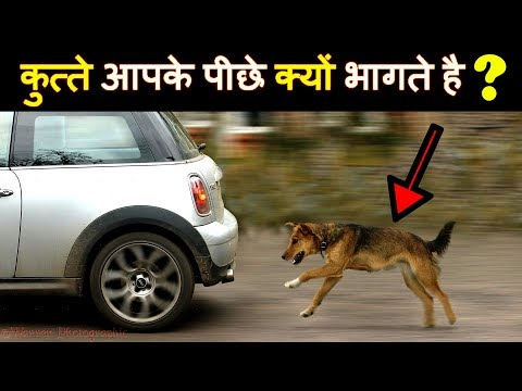Why are street dogs crying at night? | Superstitions about Howling Dogs