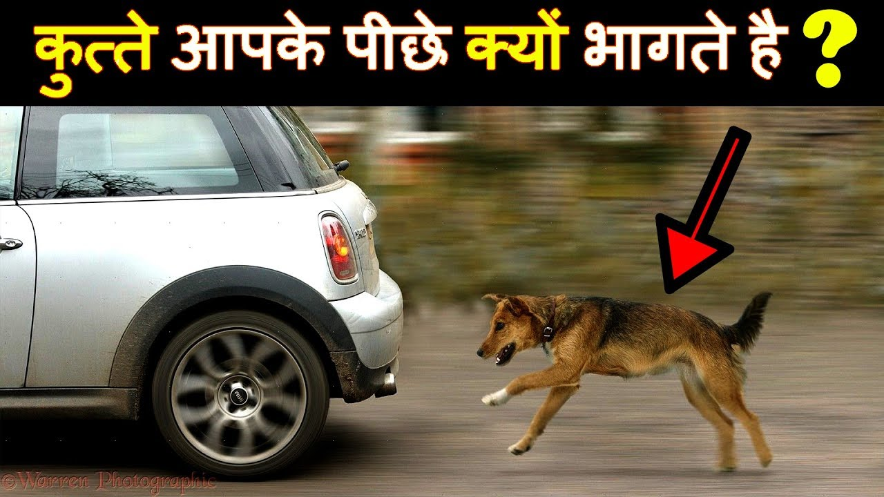 dog crying at night superstition in hindi