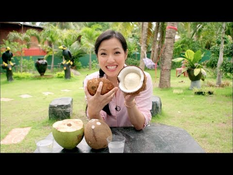 How Coconut Milk is Made - From Farm to Cans! Mini Documentary