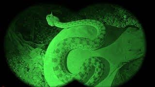 الافعى التي كادت تلدغ الفلاح/افعى ام جنيب/أخطر الافاعي/poisonous snake