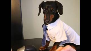 Take Your Child (Dog) to Work Day
