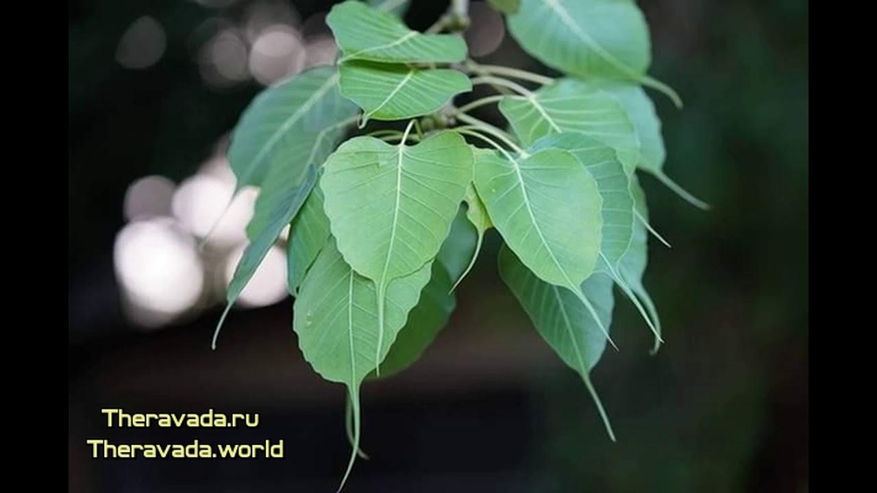 Благородный восьмеричный путь (Учение Будды. Тхеравада ...