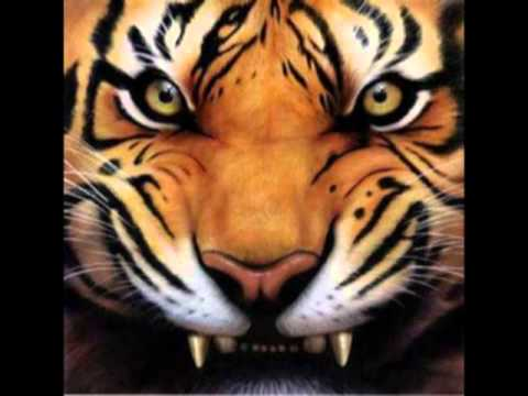 Survivors - Eye of the Tiger Karaoke Instrumental