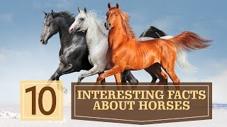10 Interesting Facts about Horses
