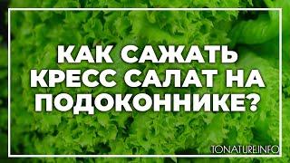 Как сажать кресс салат на подоконнике? | toNature.Info