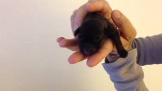 Runt Of Marlo's Litter
