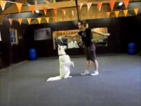 Dog Dance with White Swiss Shepherd Aura