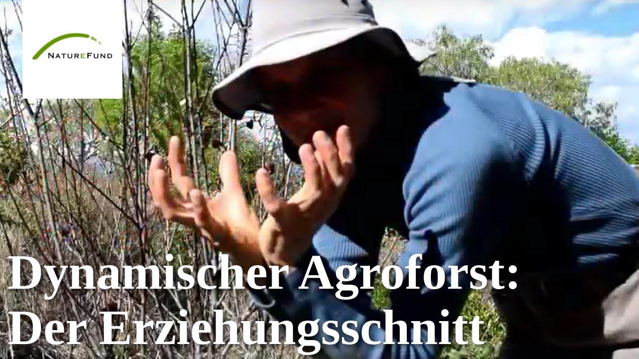 Junge Baume Schneiden Der Erziehungsschnitt Youtube