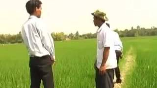 Cambodia Agriculture: Rice Farming with SoilBio1 Fertilizer (1/2)