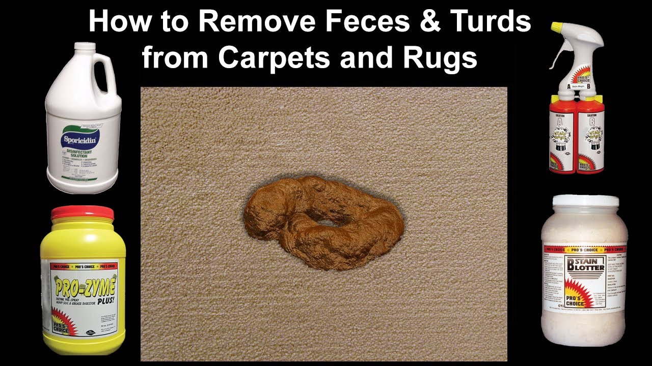 How to Professionally Remove Dog Poop, Feces and Turds on Carpets & Rugs -  from a Bane-Clene class.