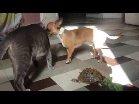 Moment cool entre un chat un chien et une tortue