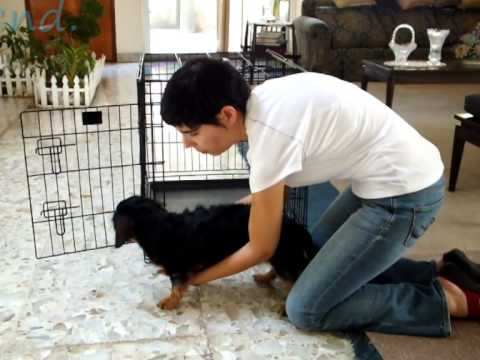 Home Remedies For Degenerative Disc Disease In Dogs