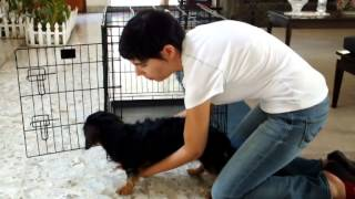Picking Up A Dog With Back Problems (ivdd, Slipped Disc, Disc Herniation, Etc.)