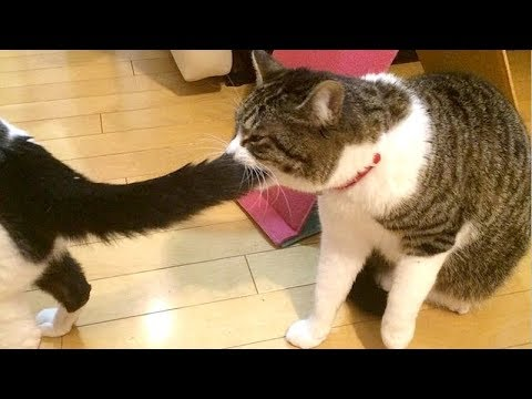 HOLDING YOUR LAUGH while watching this is IMPOSSIBLE! – Super FUNNY ANIMAL compilation