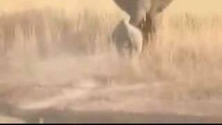 elefante vs rinoceronte - elephant vs rhino