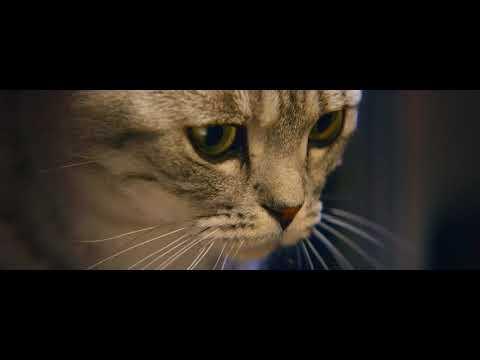 Vidéo La lampe .  Nourrissons leur curiosité