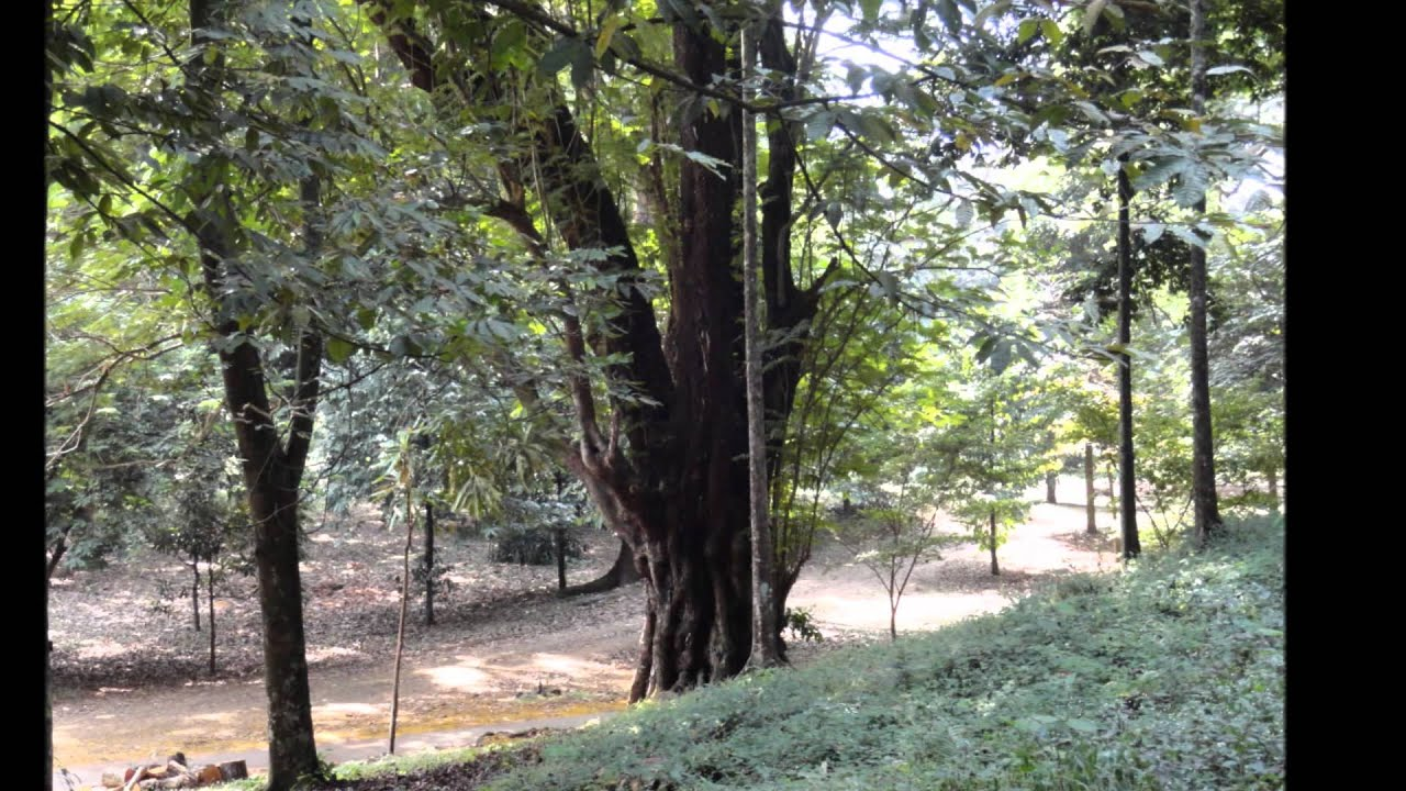 Le jardin botanique de limb cameroun youtube for Jardin botanique 78