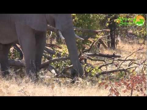 14-Day Botswana Mobile Camping Safari (2011)