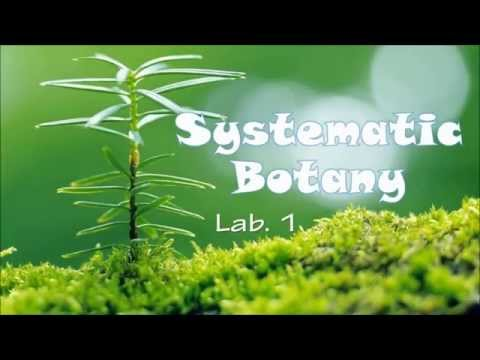Systematic Botany lab01 - 1st year Biology
