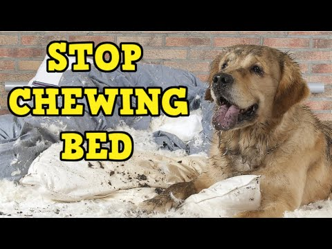 how-to-stop-a-dog-from-chewing-his-bed