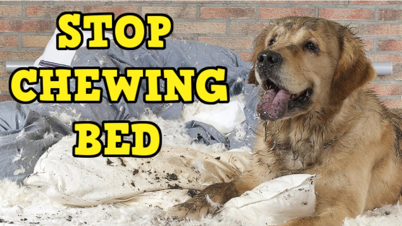 why do dogs tear up their beds