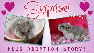 ♥ SURPRISE! Meet the Cuties + Adoption Story! Thumbnail