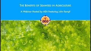 The Benefits of Seaweed in Agriculture