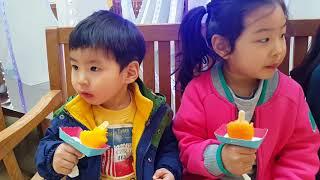 구남매 아이스크림 먹방