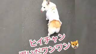 (Lucy and ヒイチャン)Baby and dog videos