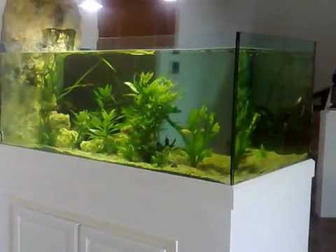 aquarium sur mesure d 39 eau douce tropicale odyssee aquarium youtube. Black Bedroom Furniture Sets. Home Design Ideas