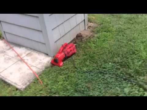 How to get rid of bees or wasps in the ground.