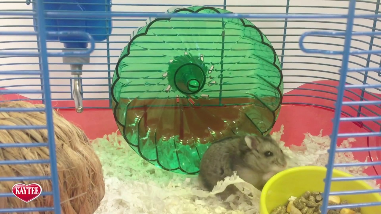 Home - Best Dwarf Hamster Cage - How to Choose The Best One
