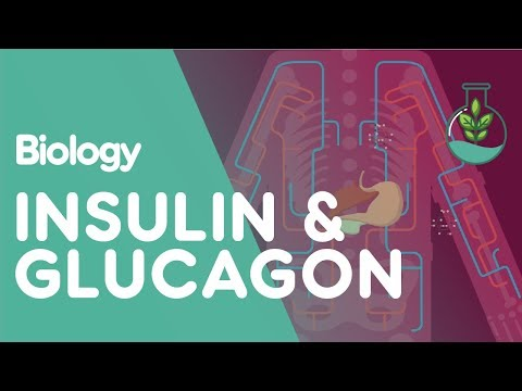 Insulin and Glucagon | Biology for All | FuseSchool