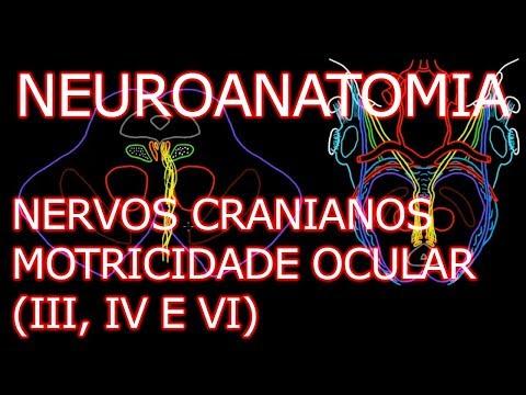 Aula: Nervos Oculomotor (III), Troclear (IV) e Abducente (VI) - Neuroanatomia #6.3