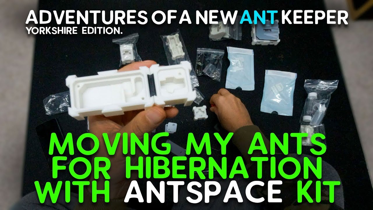 03: Ant Space Kit - Lasius Niger - Lets hibernate the Queen and her Subjects