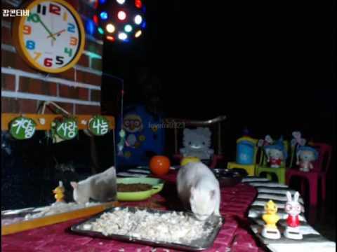 Cats Meok Bang : Stray Cats in South Korea[팝콘티비 BJ도둑고양이 나비월드] 160917 꼬맹이 조심조심 오전1시50