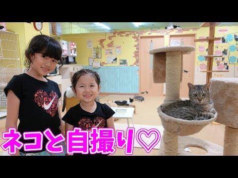 ネコカフェで猫と自撮りチャレンジ!全部のねこちゃんと写真を撮ろう!himawari-CH