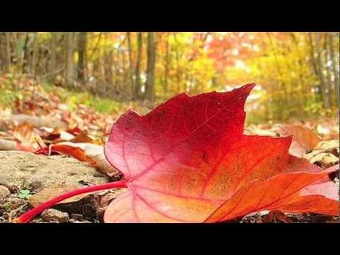 Autumn Leaves Live (with Lyrics)