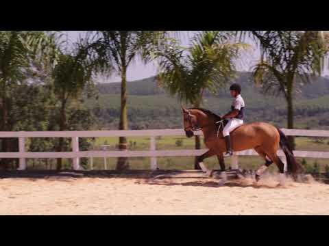 Lote 15 - Magia Cac Cavalos puro sangue Lusitanos - Coudelaria aguilar
