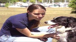 Dog Training Houston Tx Remote Dog Training Collar