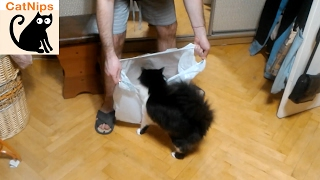 For Some Reason This Cat Loves Plastic Bags | Catnips