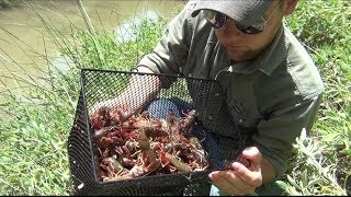 Gees Basket Minnow / Crawfish Trap Check Pt. 2