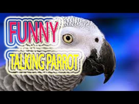 Amazing Talking Parrot | Funny Talking Parrot Videos.