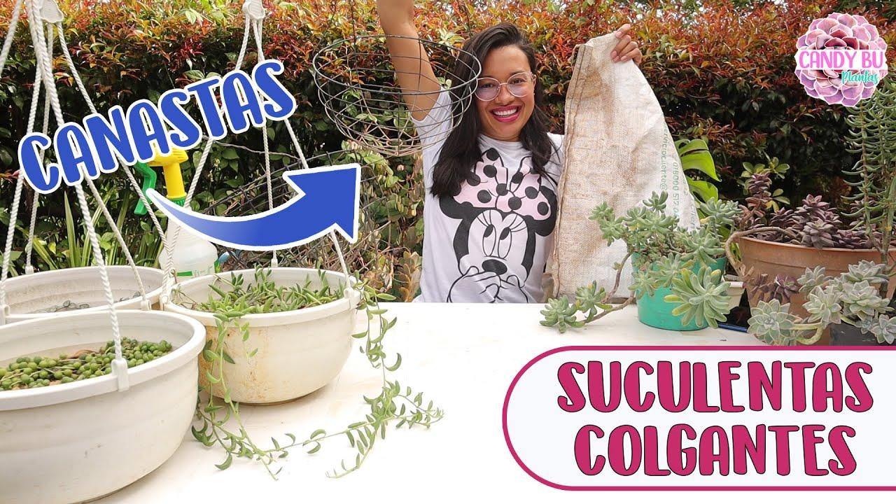 Plantando SUCULENTAS COLGANTES en canastas│Candy Bu