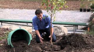 Plant a Tree in the Fall - Edmonton Valley Zoo