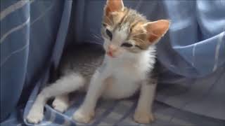 Funny Cats Sleeping Weird Positions Compilation